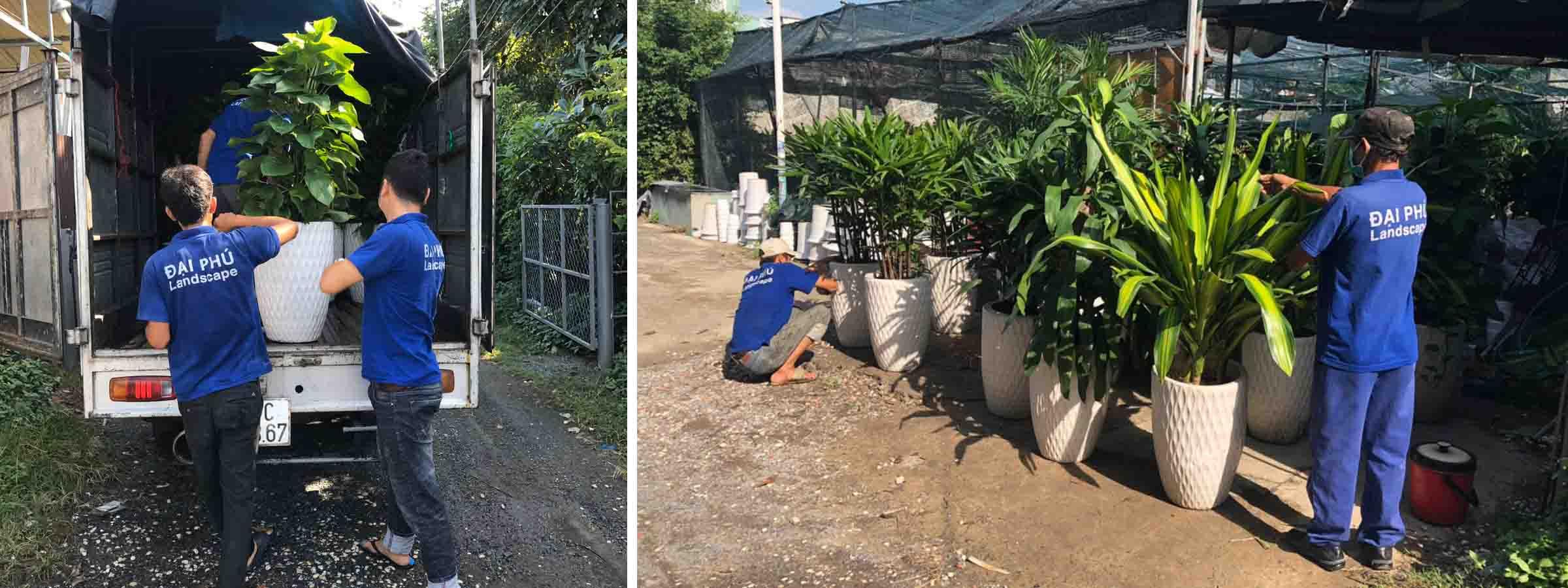 Vận chuyển cho thuê cây xanh Đại Phú