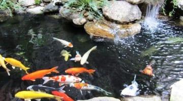Tầm quan trọng của bộ lọc trong việc làm sạch nước bể cá thủy sinh