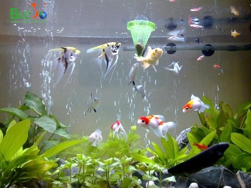 Sử dụng lọc nước cho bể/ao cá