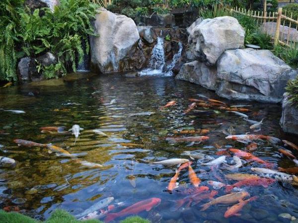 6 Cách làm trong nước hồ cá koi không bị đục hiệu quả cao