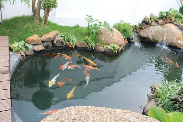 Nuôi loài cá dọn bể trong hồ cá