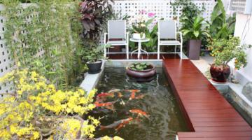 thiết kế hồ cá koi mini trong nhà giá rẻ