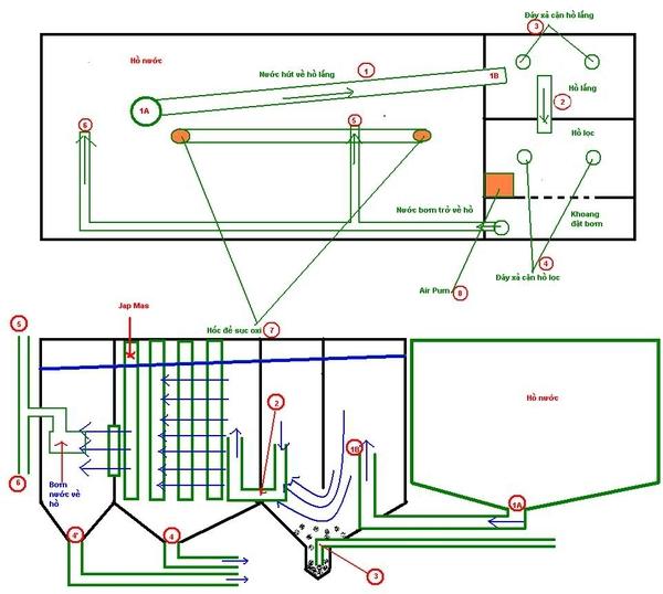 Khám phá hệ thống thiết kế lọc cho hồ cá Koi đạt chuẩn, khoa học