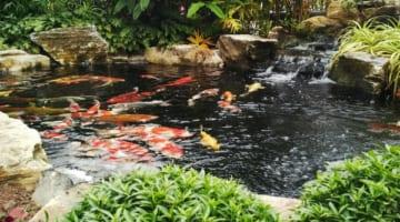 Chi phí thiết kế hồ cá Koi phụ thuộc vào các yếu tố quan trọng nào?