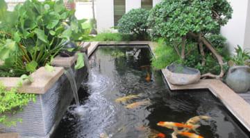 03 tiêu chuẩn thiết kế bể lọc hồ cá koi