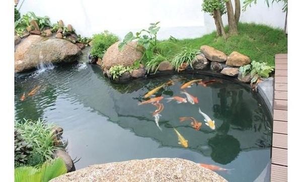 Cách thiết kế bể cá koi chuẩn đẳng cấp